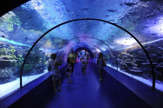 Туннель в Аквариуме Анталия