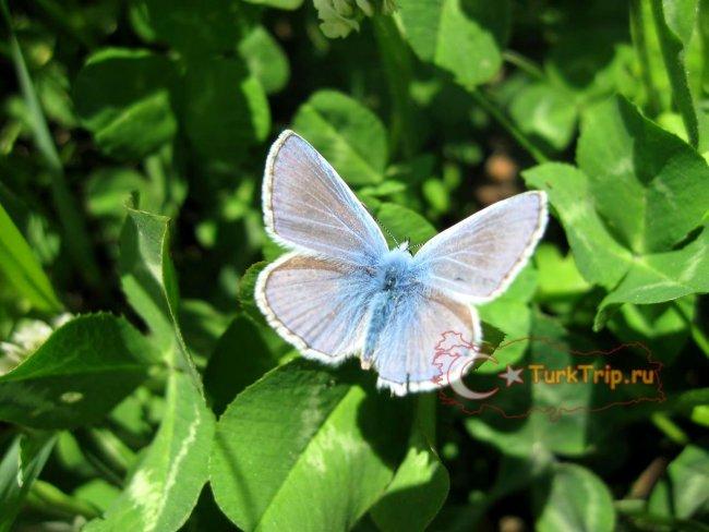 Можно увидеть вот такую диковинную бабочку