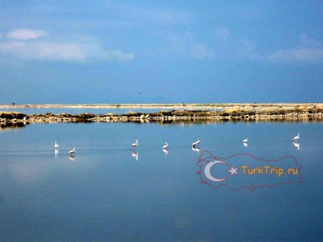 Розовые фламинго в заповеднике Birds Paradise