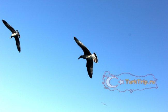Чайки в небе у Галатского моста