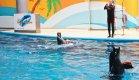 Дельфинарий в Стамбуле